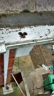 gutter clearing, conservatory cleaning, property maintenance: Damp Problems the Potential Cost of Ignoring your ...