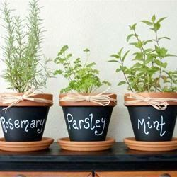 VINTAGE ROMANCE STYLE: 25 cute & simple herb garden ideas. This one is still a winner indoors.