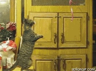 Funny Cat Images (24 GIFs) - coolfeed.co (14)