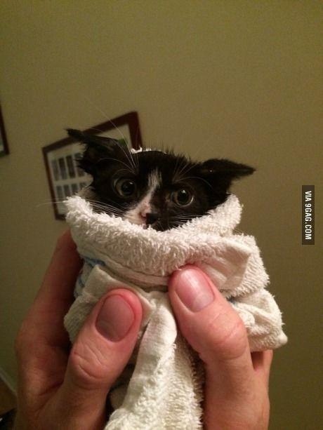 Dobby has a towel, Dobby is a free elf!