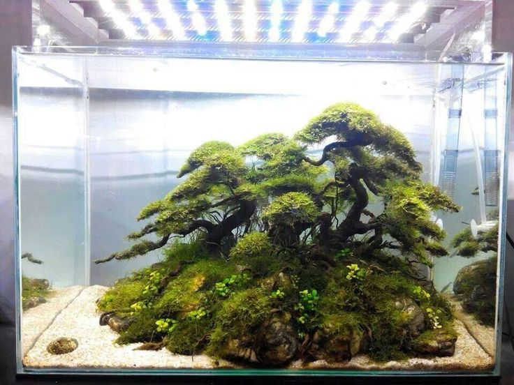 Best FRESHWATER Images On Pinterest Aquarium Ideas Fish - Beautiful photography reveals underwater complexity aquariums