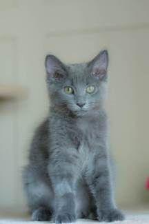 Little Paws Kitten Rescue - Harriette   Cats & Kittens   Gumtree Australia Brisbane South East - Camp Hill   1172186166