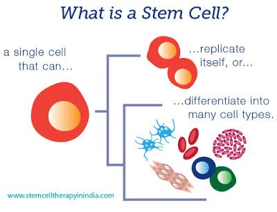 STEM CELL THERAPY IN INDIA AT AFFORDABLE COST