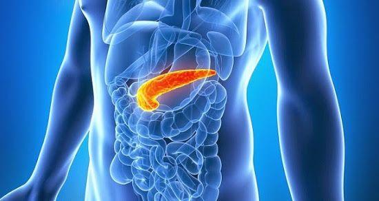 O pâncreas é um órgão abdominal, que faz parte dos sistemas digestivo e endócrino. Conheça as suas funções, localização e doenças.
