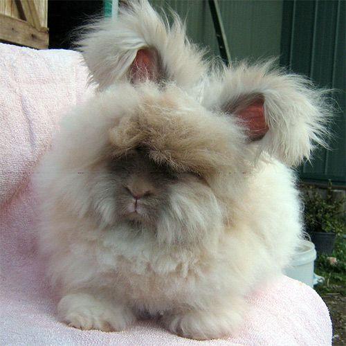 Домашние кролики, кролик | Скачать изображение