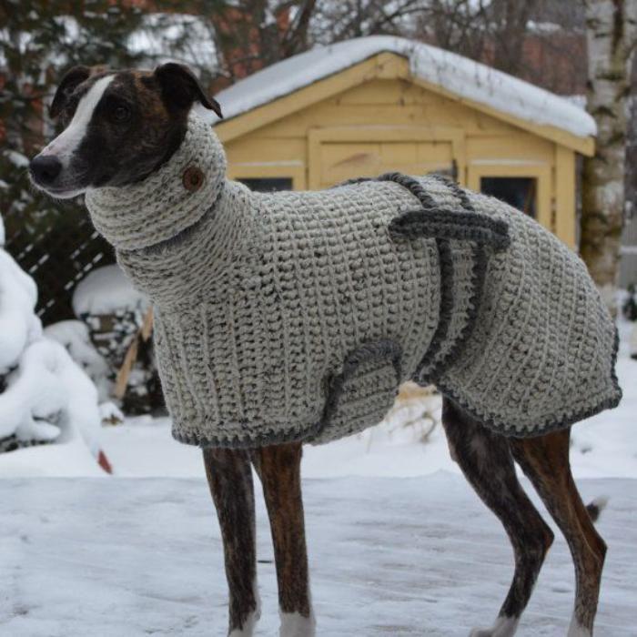 pull pour chien en laine paillettes