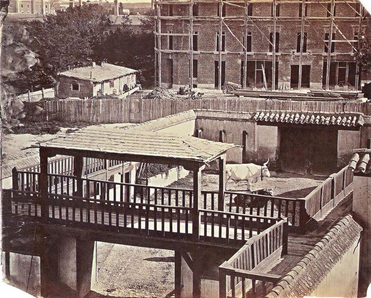 Madrid- Corrales de la plaza de toros de la Puerta de Alcalá.1858. (CLIFFORD.CH).