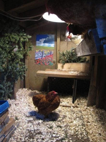 Hipster Backyard Chickens :  on Pinterest  Chicken eggs, Raising chickens and Homemade beef jerky