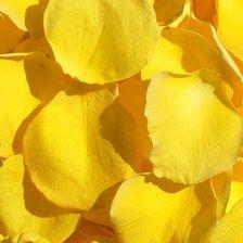 Click to Order Yellow Rose Petals