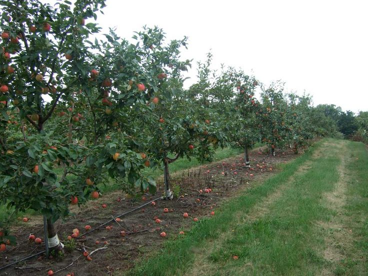pictures of apple farm | Before You Start an Apple Orchard