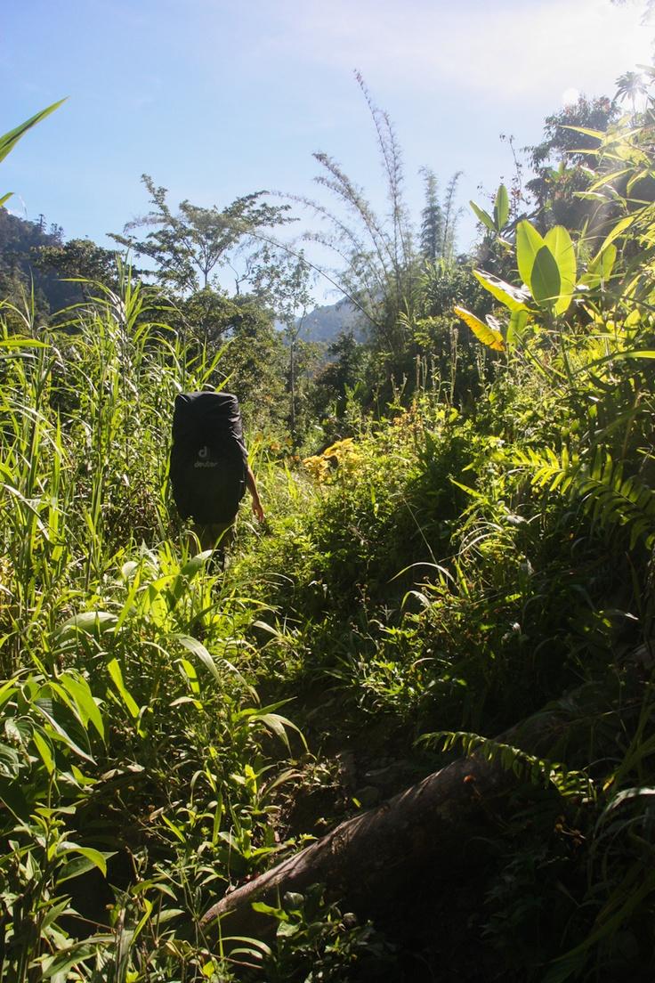 The lush green of the jungle. Bulldog Track, Upper Eloa Valley, Papua New Guinea