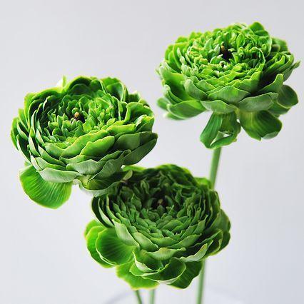 ラナンキュラス「ポムロール」 - Flower File 大田市場の花き仲卸 株式会社フローラルジャパン