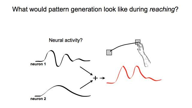"""""""A new model that says motor neurons send basic rhythmic patterns, not specific information, down the spine to drive movement.  'The brain has had an evolutionary goal to drive movements that help us survive. The primary motor cortex is key to these functions. The patterns of activity it displays presumably derive from evolutionarily older rhythmic motions such as swimming and walking. Rhythm is a basic building block of movement,' explained Churchland."""""""