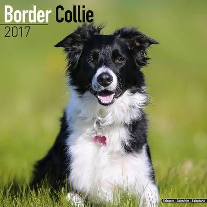 Avonside Hunde-Kalender 2017Avonside Hunde Wandkalender 2017: Border Collie