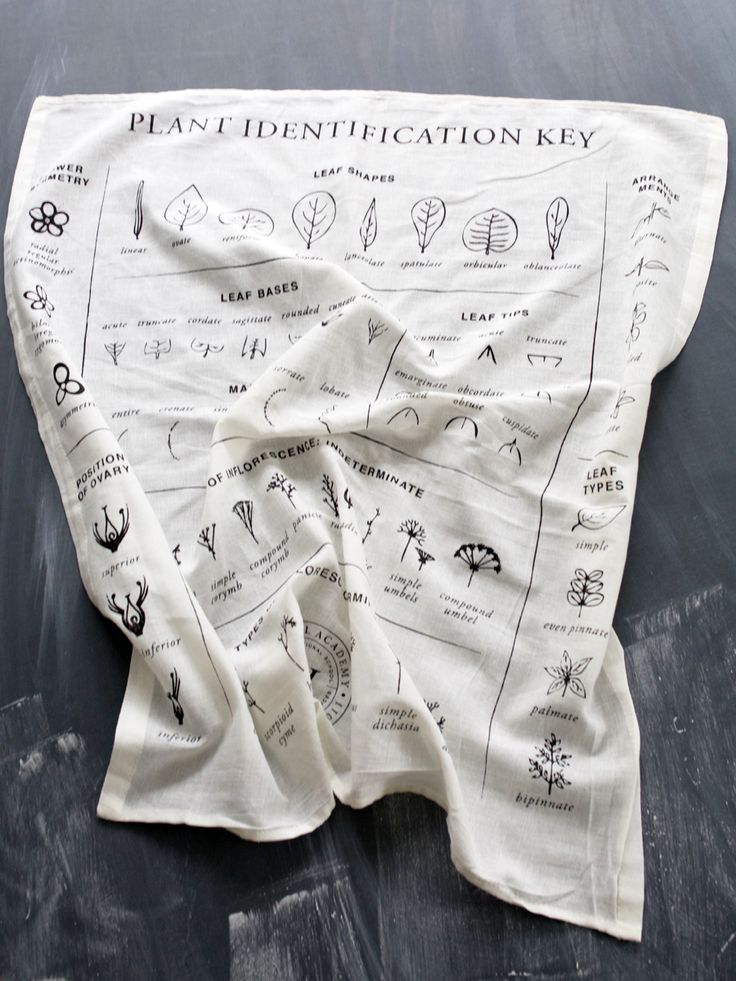 Find the perfect gift for any herbal enthusiast like this Organic Flour Sack with Plant Identification Key Illustration –at the Herbal Academy Goods Shop! This towel is a wonderfully useful educational tool –enjoy using it in the kitchen while crafting herbal remedies or on a foraging trip!