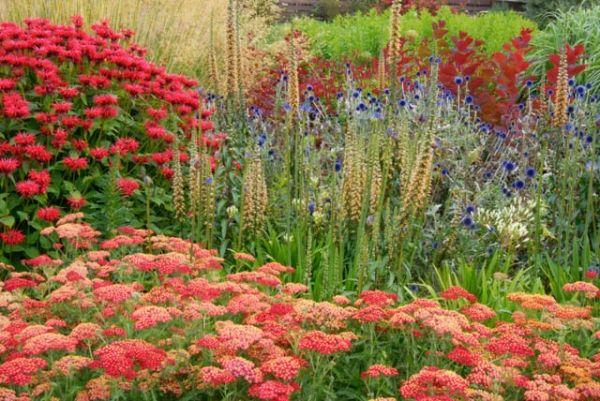 Garden ideas border ideas perennial planting perennial for Colorful low maintenance perennials