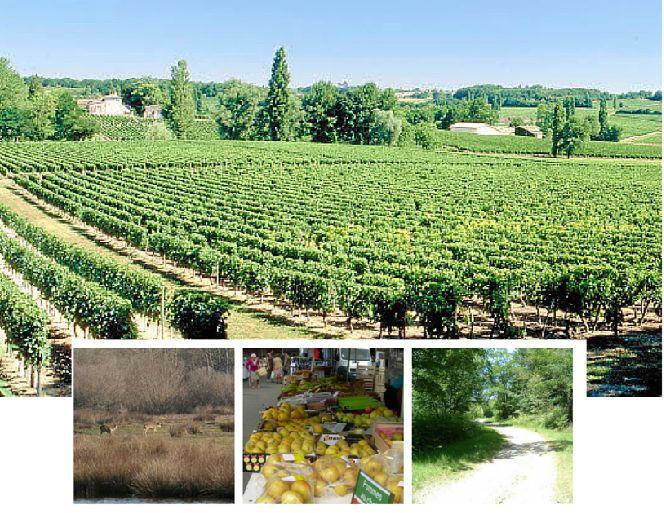 Cubnezais : un environnement préservé où il fait bon de vivre ....   Cubnezais est une commune rurale de la Gironde dont la vocation principale est la viticulture. Elles se situe entre Saint André de Cubzac et Cavignac, à proximité de la RN 10 et à une trentaine de kms de la Métropole Bordelaise. 9 maisons contemporaines  de constructeur à Cubnezais. Implantées dans un écrin de verdoyant fait de prairies et forêts, à proximité d'un bourg qui s'inscrit dans l'architecture typiquement…