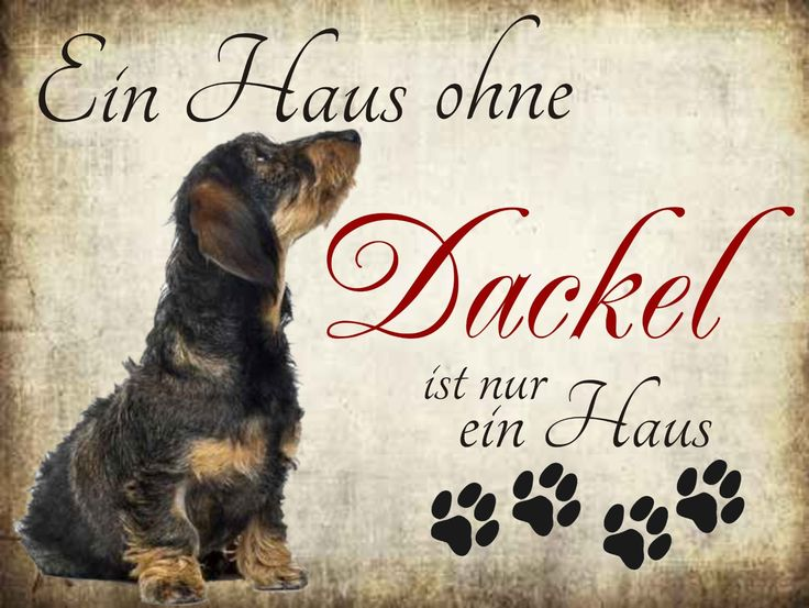 """Amazon.de: """"Ein Haus ohne Dackel ist nur ein Haus"""" Hundeschilder, Hundedeko, Hund Türschilder"""