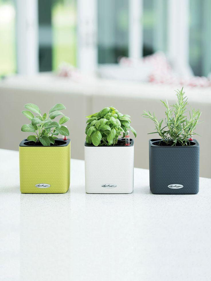 Best 25 herb planters ideas on pinterest growing herbs indoors diy herb garden and growing - Indoor herb garden containers ...