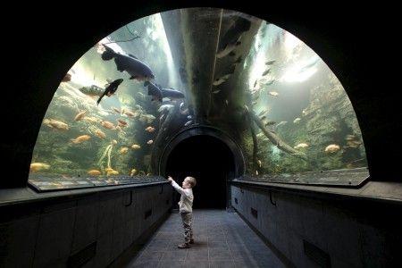 Obří Akvárium v Hradci Králové - Největší sladkovodní akvárium v ČR  Více zde: http://www.tipnavylety.cz/products/obri-akvarium-v-hradci-kralove-nejvetsi-sladkovodni-akvarium-v-cr/
