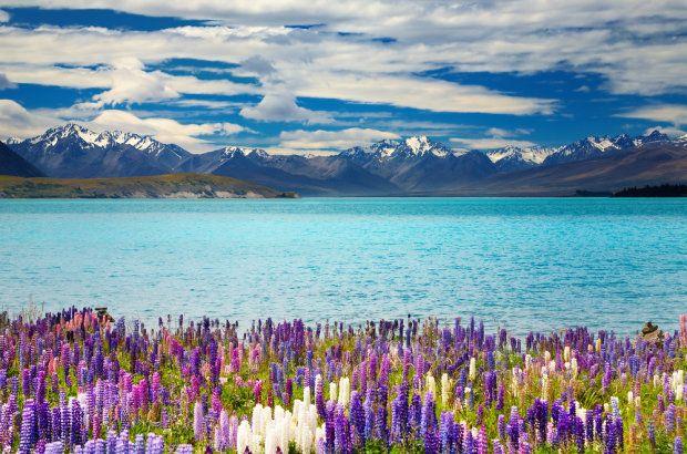 Jezioro Tekapo, Nowa Zelandia.