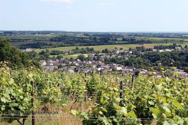 Domaine des Forges, Saint Aubin de Luigné | Amateur Wine