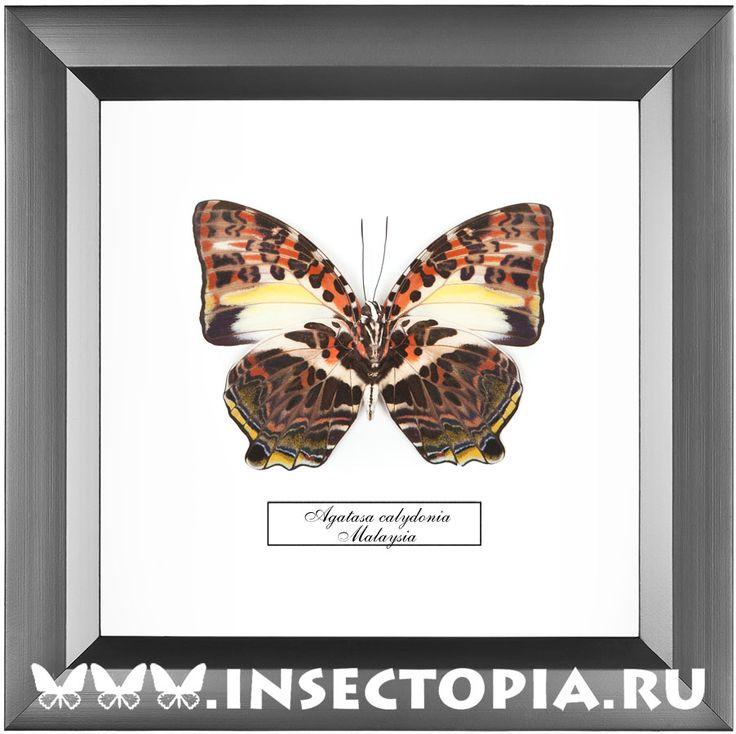 Бабочки, жуки и другие насекомые в рамках.