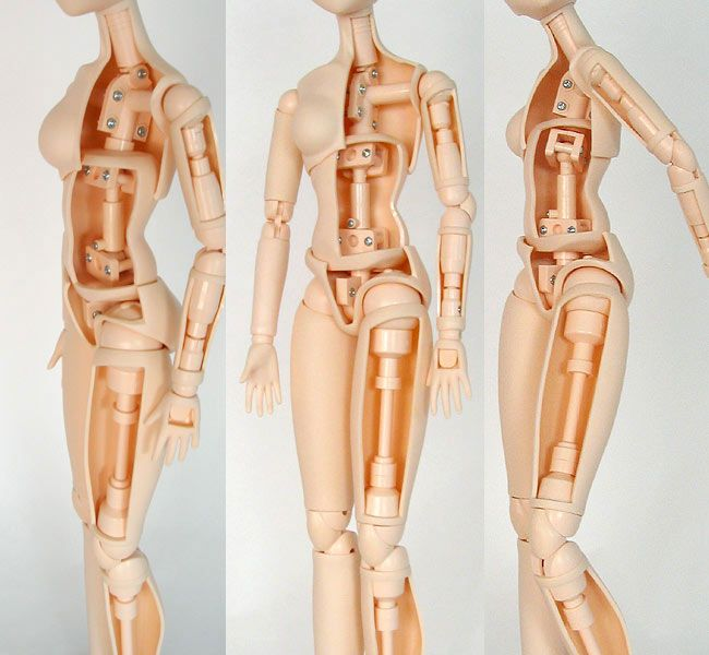bjd anatomy