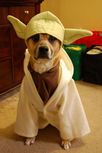 Star Wars Day: Yoda the Dog! Today I'm posting lots of Jedi costumes to celebrate May the 4th!