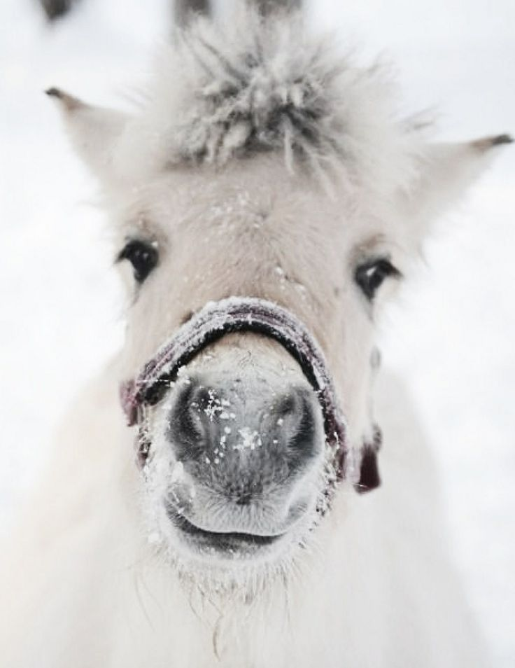"""* * PONY: """" I whinnied so much in de cold todays, dat nowz me voice iz hoarse."""""""
