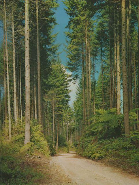 Redwoods yall