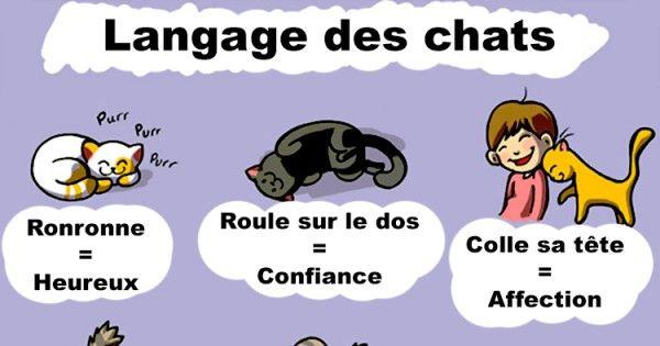 Le langage des chats