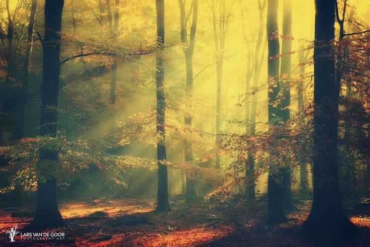 sinfonia della foresta by Lars van de Goor on 500px