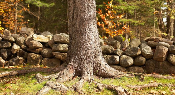 4 Steps to Dealing with Invasive Tree Roots Tree roots