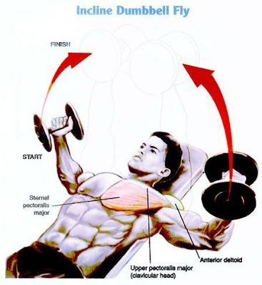 Though the chest can be construed as consisting of a single muscle mass, workouts should be ...