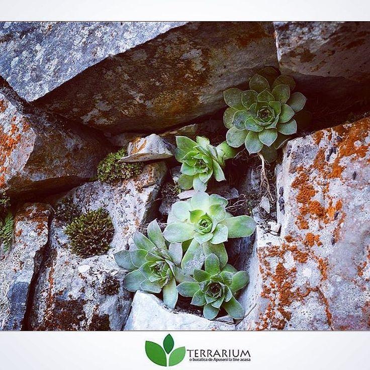 Vezi această fotografie Instagram de @terrariumshop.ro  • 8 de aprecieri