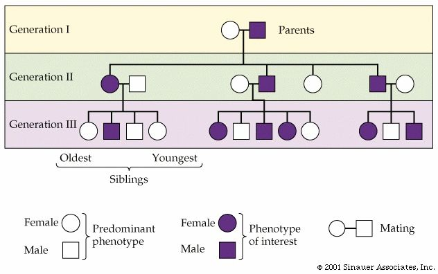 The Ethical Care of Intersex Infants: Normalizing Genitalia at the Expense of Well-Being
