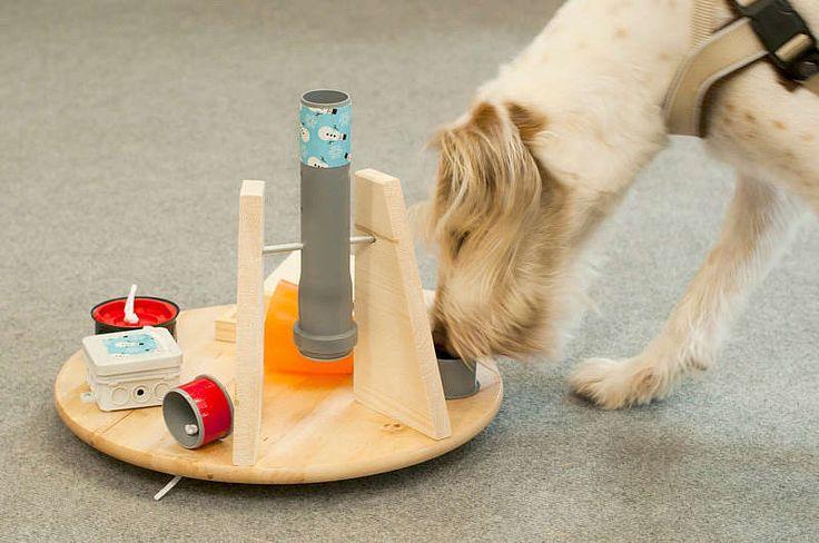 Futtersuchspiel für Hunde