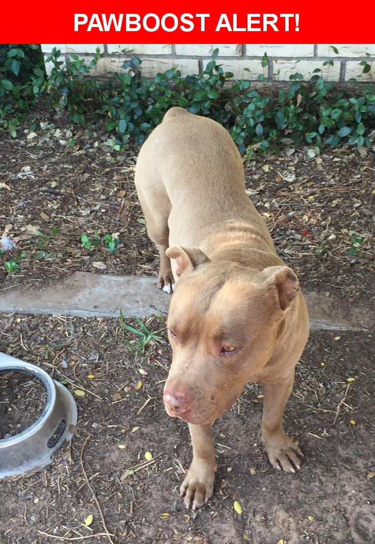 Is this your lost pet? Found in West Odessa, TX 79764. Please spread the word so we can find the owner!  Light brown pit found yesterday at Apple ridge apartments.  If your looking for him please contact and show proof he is yours.  Near W University Blvd & baca dr