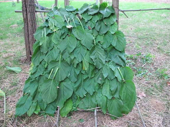 12 Survival Hacks Using Just Leaves