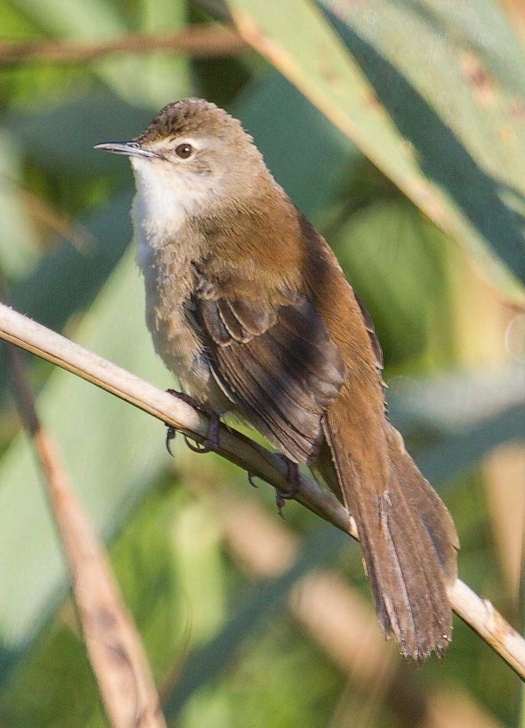 Image result for warbler