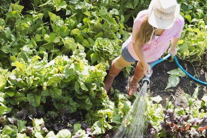 Last van onkruid in je tuin ? Met deze 4 natuurlijke middeltjes ben je er zo vanaf. Goedkoop, makkelijk en goed voor het milieu !