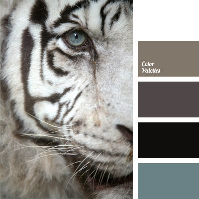 Albino tiger is a miracle of nature. It is majestic animal. Therefore, color palette, made in its colors, also striking. Combination of pale cornflower, color of albino tiger's eye, pale brown, black and white will be really a godsend for any designer.