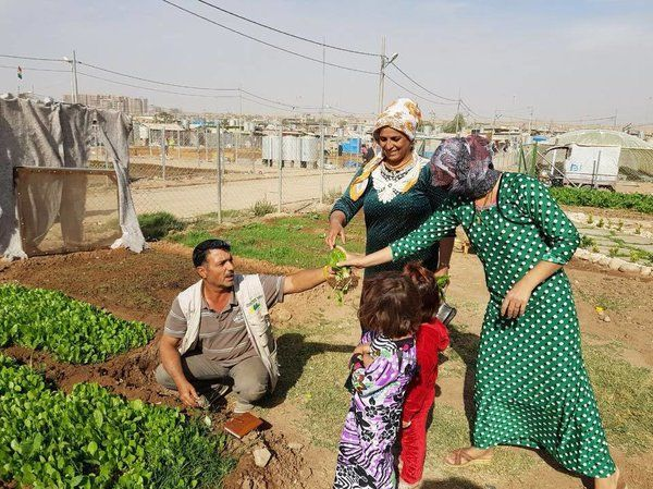 Covered the vital work of the Lemon Tree Trust facilitating gardening in Syrian refugee camps with @NPR Community And Vegetables Grow Side-By-Side In Syrian Refugee Camp Gardens