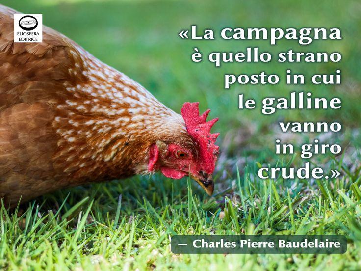 Considerazione sempre più vera ai giorni nostri! Siamo abituati a comprare uova e pollame, ma quand'è l'ultima volta che abbiamo visto una gallina nel suo ambiente naturale? Quando lo hanno potuto fare i bambini che vivono in città?  Sei d'accordo?  «La campagna è quello strano posto in cui le galline vanno in giro crude.» ― Charles Pierre Baudelaire (Parigi, 9 aprile 1821 – Parigi, 31 agosto 1867), poeta, scrittore e critico letterario francese. #campagna, #galline, #crude, #citazioni…