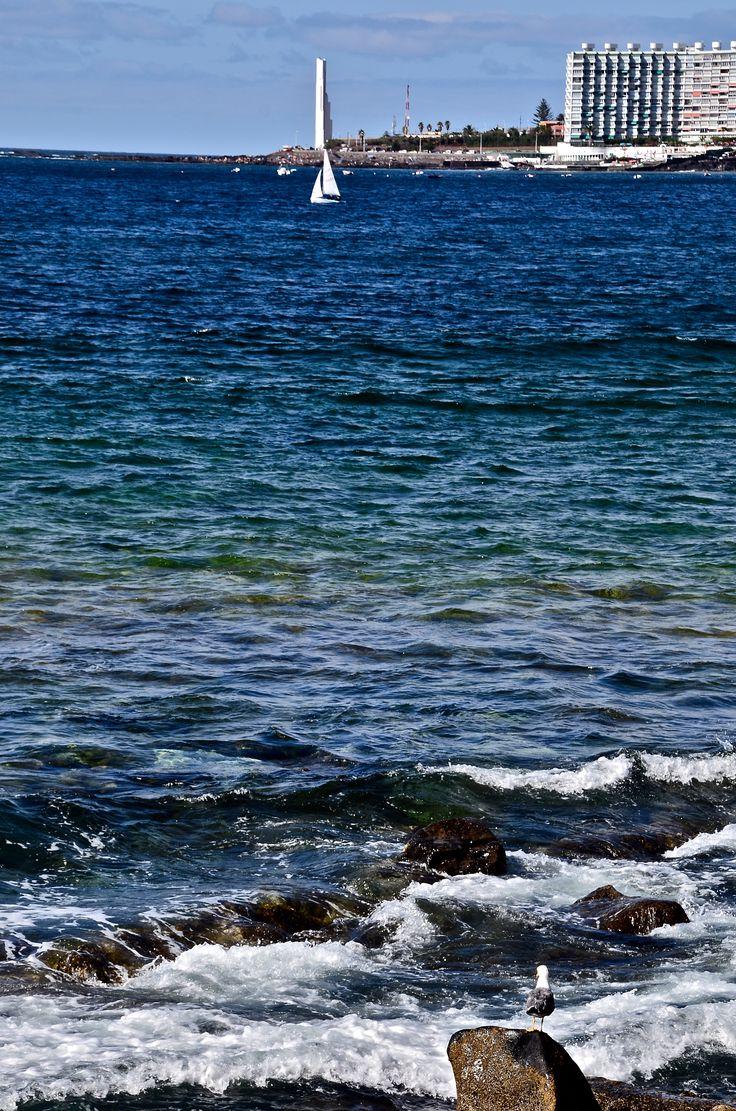 """""""-Cada uno de nosotros es en verdad una idea de la Gran Gaviota, una idea ilimitada de la libertad -diría Juan por las tardes, en la playa -, y el vuelo de alta precisión es un paso hacia la expresión de nuestra verdadera naturaleza. Tenemos que rechazar todo lo que nos limite. Esta es la causa de todas estas prácticas a alta y baja velocidad, de estas acrobacias..."""" Juan Salvador Gaviota."""