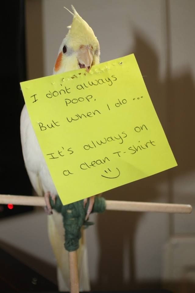 Oh so true, but it wouldn't be a home with out a Cockatiel.