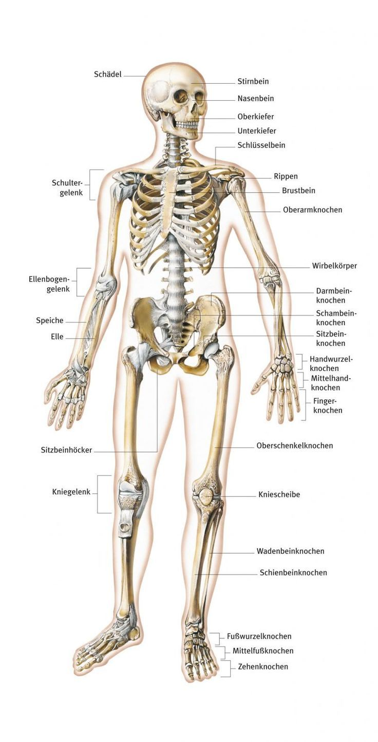 The 17 best images about Anatomie on Pinterest | Http://www ...