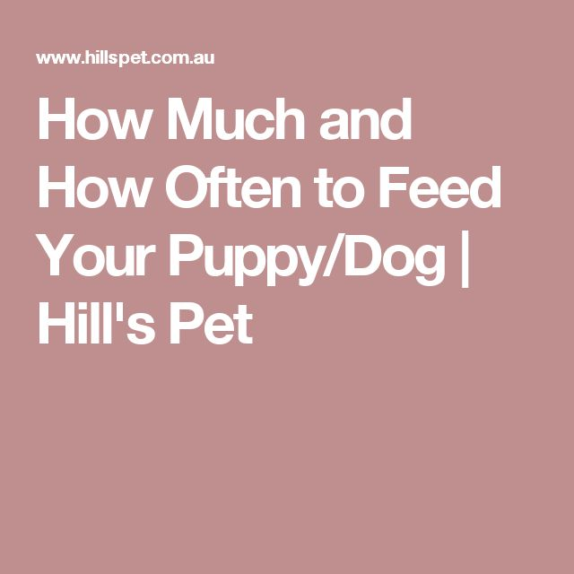 How Much and How Often to Feed Your Puppy/Dog | Hill's Pet