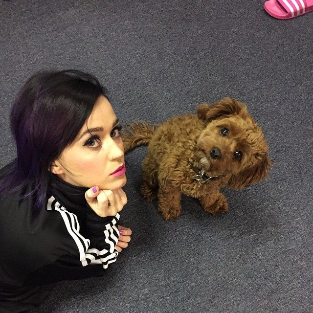 Katy Perry with a dog!